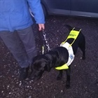 Bramble the dog makes sure that the visually impaired 'are seen.'